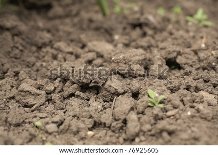 close up of dry soil, dusty and rough