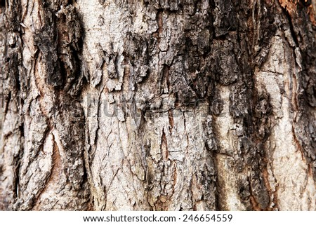 Close up of Dying Tree Texture - stock photo