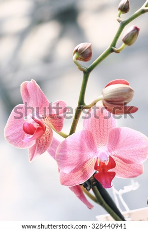 Close up of elegant orchid flower with bugs