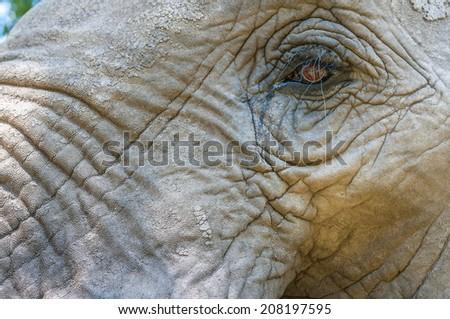 Close-up of elephant eye - stock photo