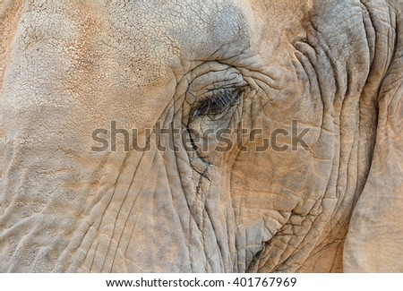 Close-up of elephant eye surrounded by wrinkles