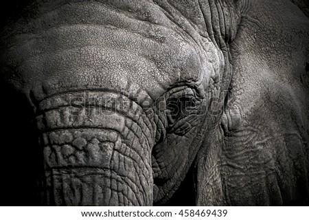 Close-up of Elephant' Head - stock photo