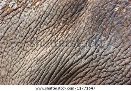 close up of elephant skin - stock photo
