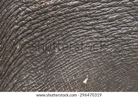 close up of elephant skin texture - stock photo