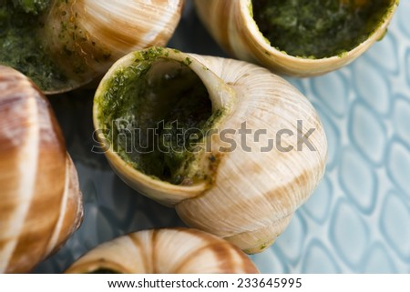 Close up of Escargots with garlic butter  - stock photo
