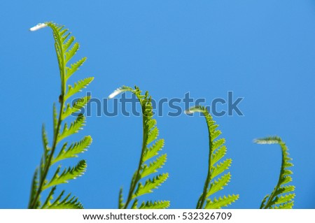 Close up of exotic tropical ferns with shallow depth of field. Blue sky background