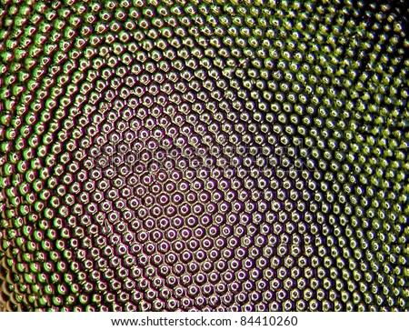Close up of facet eye of a mango tree borer - stock photo
