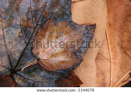 Close-up of fallen leaves in Autumn. - stock photo