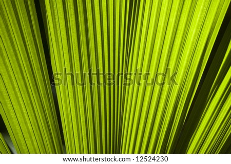 close up of fan palm leaves