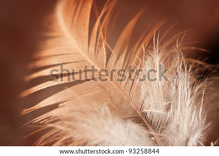 Close up of feather against golden brown background - stock photo