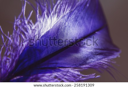 Close-up of feather with light on background.Abstract and Silhouette style. - stock photo