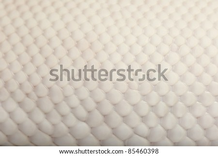 Close-up of Female Pied Spider Royal python skin, ball python, Python regius, 18 months old - stock photo