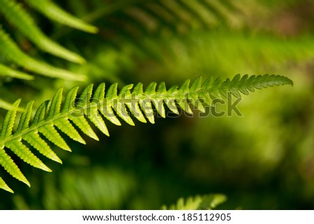 Close up of fern leaf - stock photo