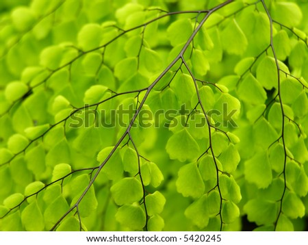 Close-up of fern leaf with lots of details and to be used as a background