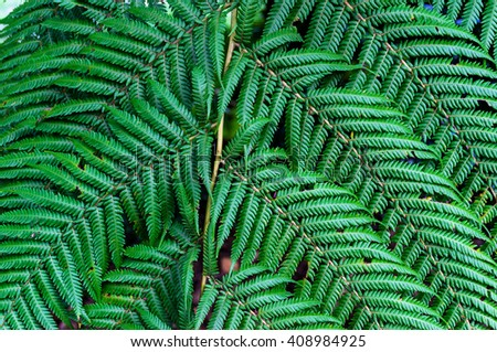 Close up of fern leaves. Nature texture background. Macro green foliage wallpaper - stock photo