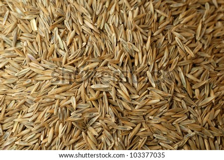 Close up of fescue grass seed - stock photo