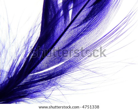 Close-up of fine purple feather against white background