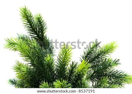 Close up of fir tree brach isolated on white - stock photo