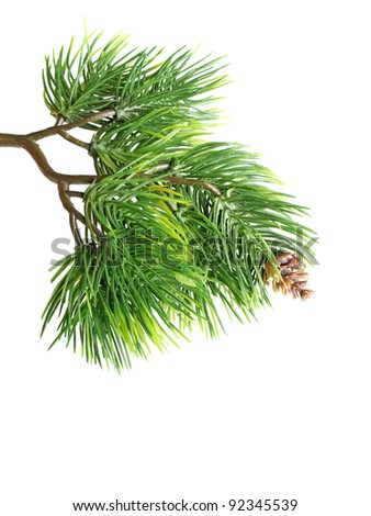 Close up of fir tree branch isolated on white - stock photo