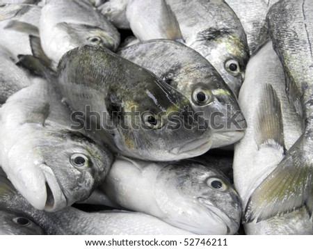 close up of fished giltheads stock (Sparus aurata) - stock photo