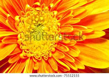 Close up of flower - stock photo