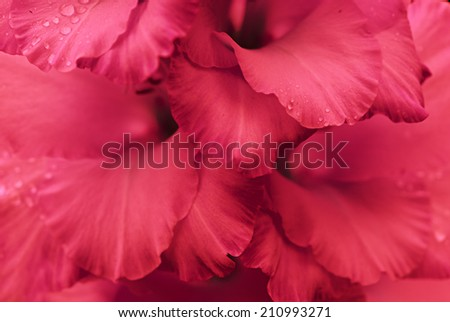 close up of flower petals - stock photo