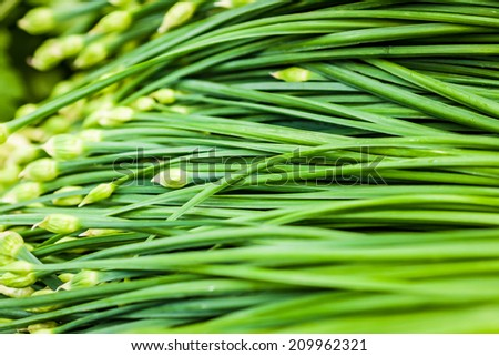 Close up of flowering chives - stock photo