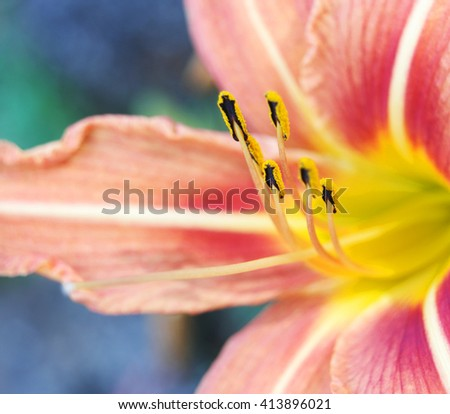 Close up of flowers in nature - stock photo