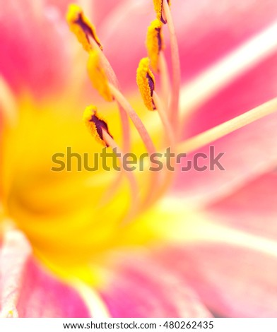 Close up of flowers in nature