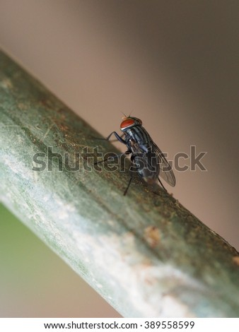 Close Up Of Fly On Tree Trunk Background - stock photo