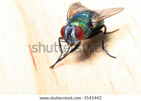 close up of fly on wooden background - stock photo