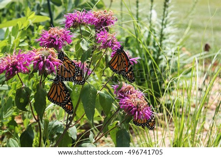 how to clean up bee balm