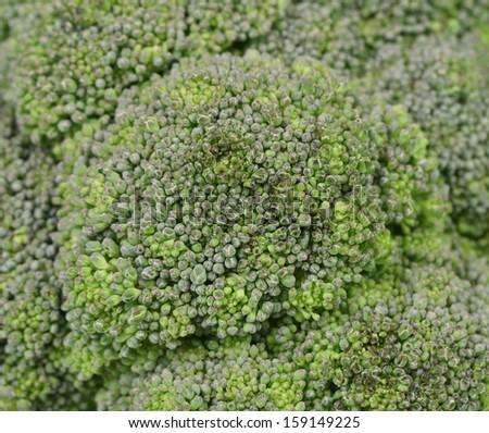 Close up of fresh broccoli. Whole background. - stock photo