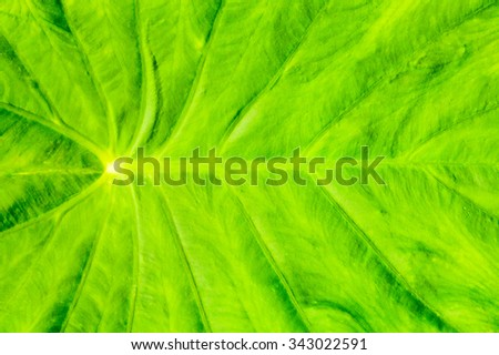 Close up of fresh green leave - stock photo
