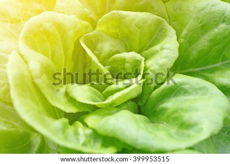 Close up of fresh green lettuce as background - stock photo