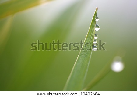 Close-up of fresh green straws with water as a background