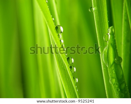 Close-up of fresh green straws with water drops - stock photo