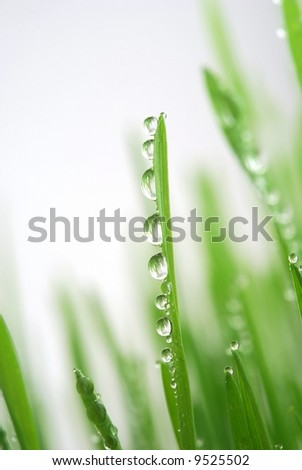 Close-up of fresh green straws with water drops against white background - stock photo
