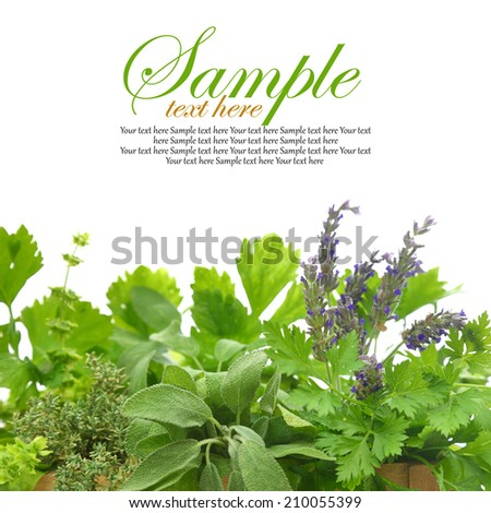 Close up of fresh herbs - stock photo