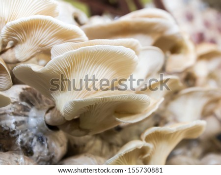 Close-up of fresh mushrooms growing in farm - stock photo