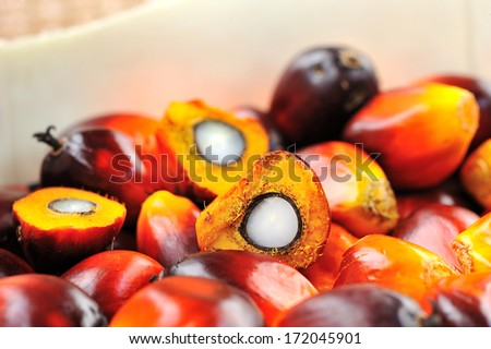 Close up of fresh oil palm fruits and coffee cream, selective focus.   - stock photo