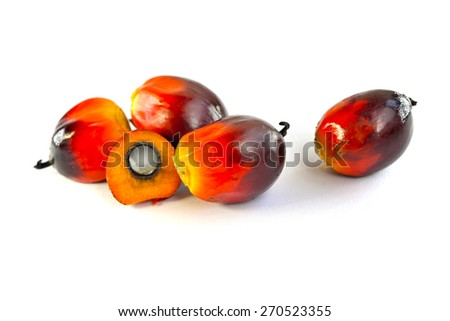 Close up of fresh oil palm fruits isolated on white background, selective focus.  - stock photo