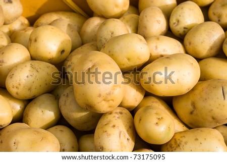 Close-up of fresh potato in daylight - stock photo