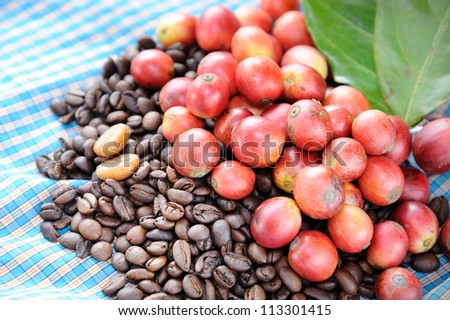 Close up of fresh raw coffee beans with leaf on texture background, selective focus.