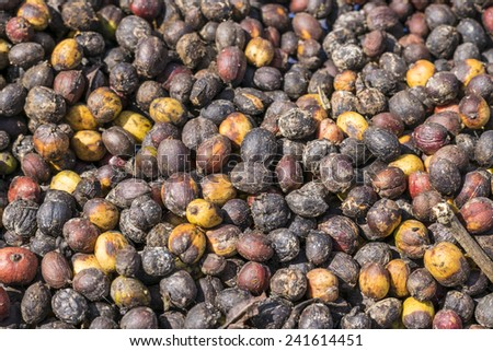 Close up of fresh raw coffee beans with leaf textured background - stock photo