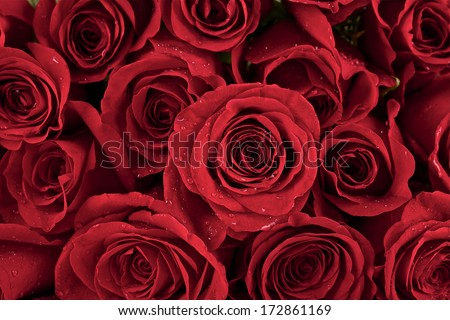 Close up of fresh red roses witch water drops - stock photo