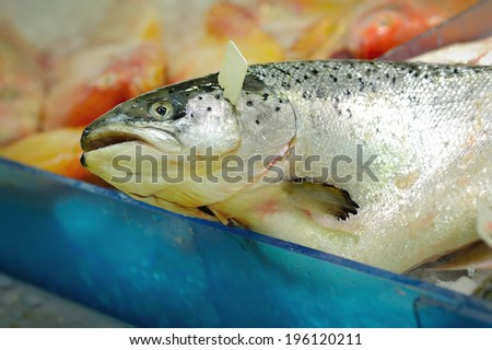 Close up of fresh salmon fish on open market, selective focus.