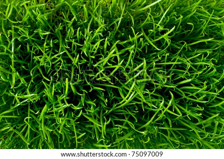 close up of fresh spring grass - stock photo