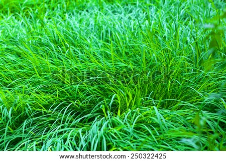 Close up of fresh thick grass in the early morning - stock photo