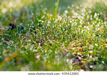 Close up of fresh thick grass with water drops in the early morning. green grass close up. Bright vibrant green grass. Bright vibrant green grass - stock photo